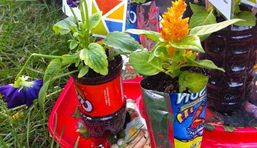 Выращиваем рассаду и цветы в пластиковых бутылках